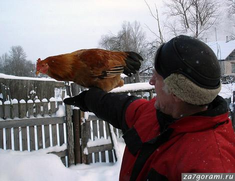 Курица. Псковский двор