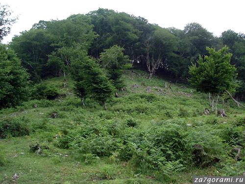 Гора Джегета. Вырубки леса