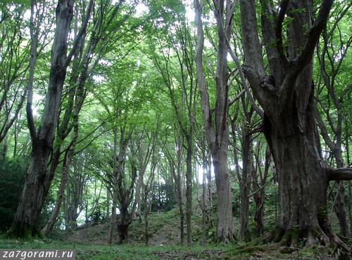 Лес на горе Джегета