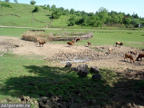 Мегрельский загон для крупного рогатого скота