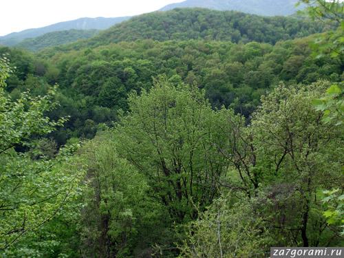 Лес рядом с Цхваричамиа