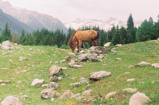 Местная лошадь