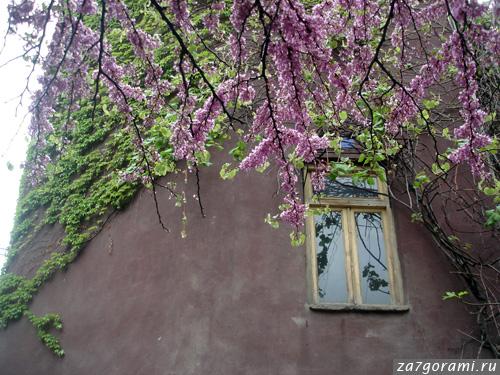 Тбилисский дом