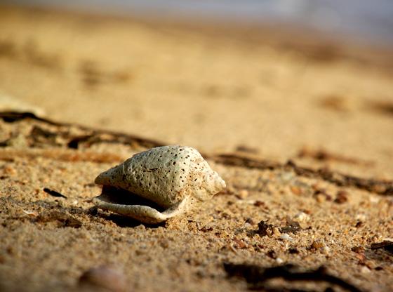 Мертвая ракушка на пляже, Краби, Тайланд