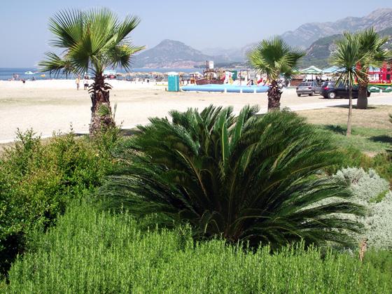 Пальмы на набережной Бара