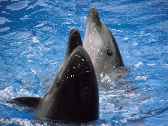 дельфины в батуми