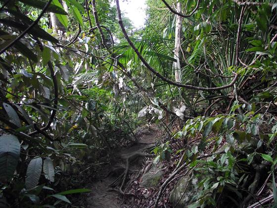 нац парк Пенанга