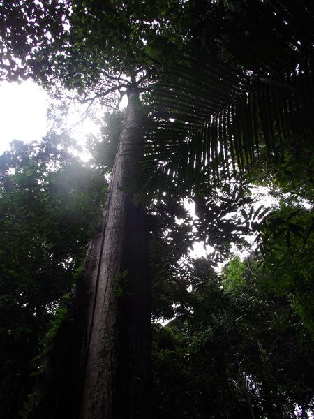 джунгли малайзии