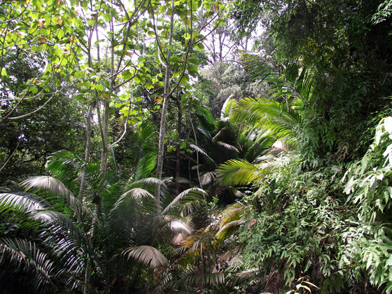 тропические пальмы