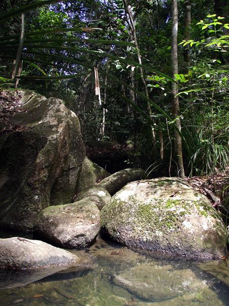 вода в джунглях