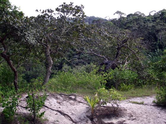 растительность пенанг
