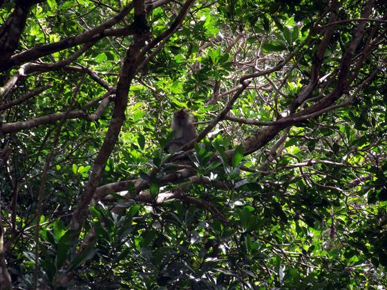 макака в джунглях