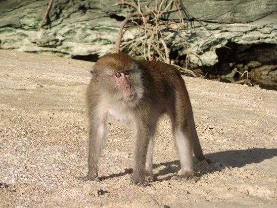 Агрессия у обезьян
