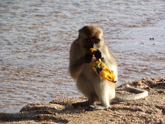 Прикольная обезьянка