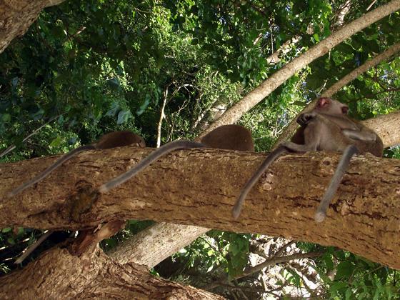 Фото обезьян на дереве