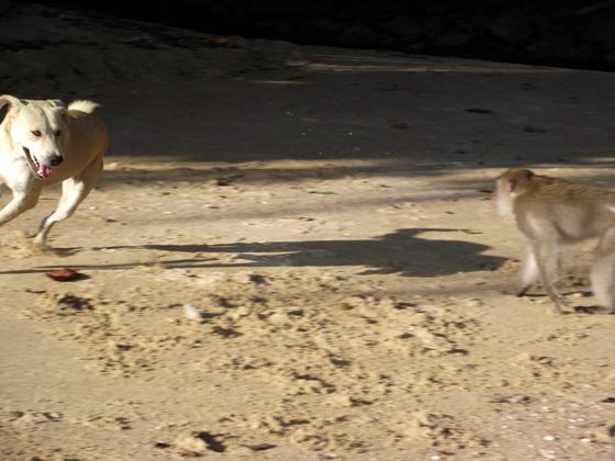 Отношения собак и обезьян