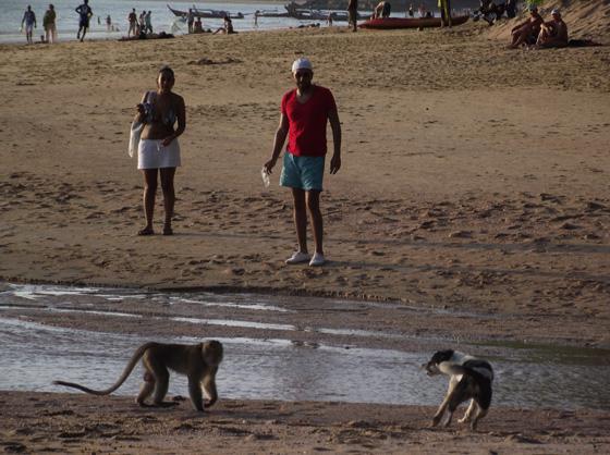 Собака нападает на обезьяну