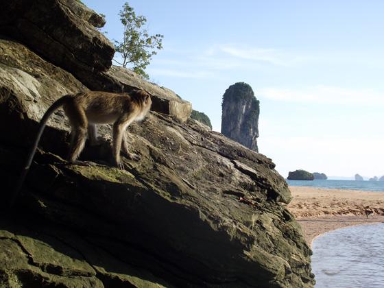 Обезьяна пляже Ао Нанга