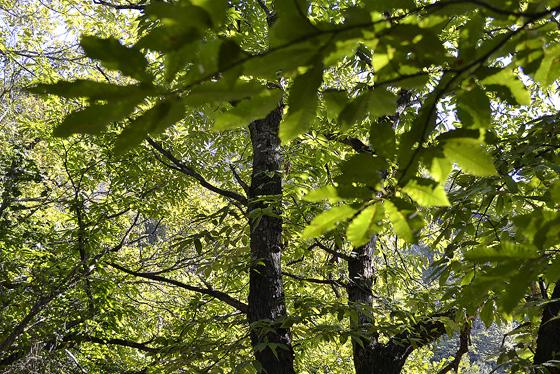 леса под гелати