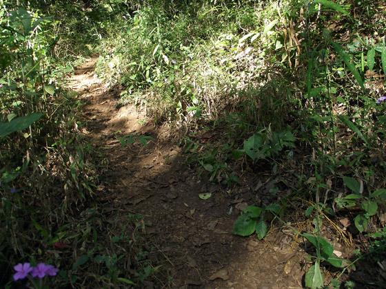 трава в джунглях