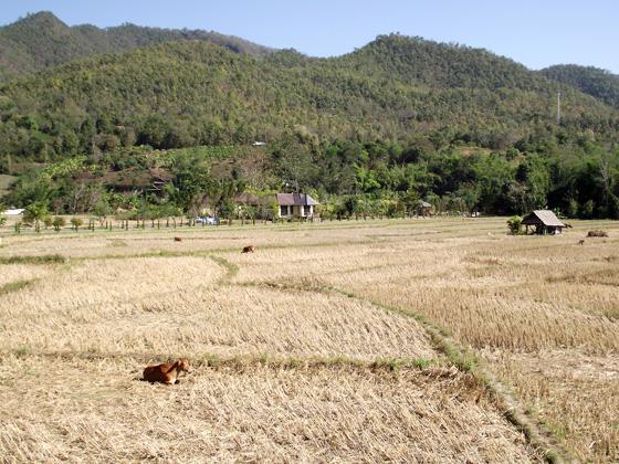 село в Таиланде
