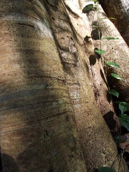джунгли Таиланд