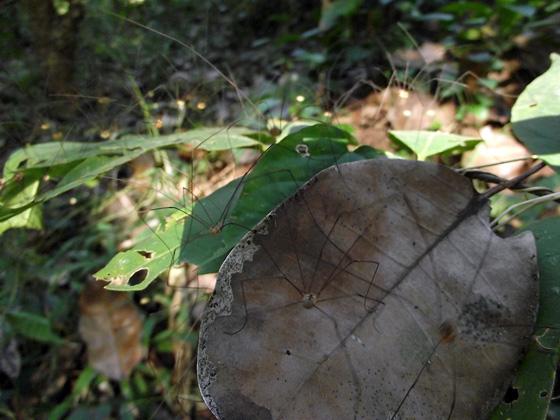 нашествие пауков в джунглях