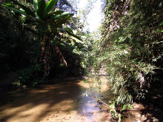 горная река в джунглях