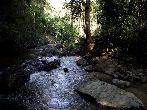 тропическая горная река