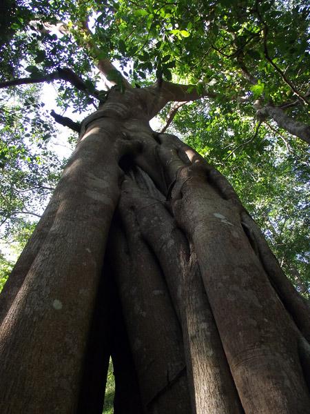 дерево в тропиках