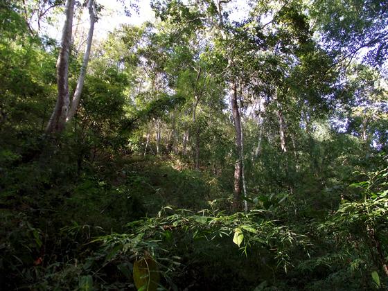 джунгли в юго-восточной азии