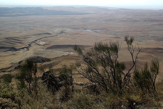 места обитания кавказской агамы