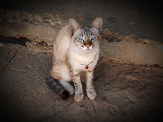 кошка на лице Лоэ