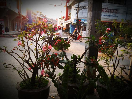 Лоэ Таиланд