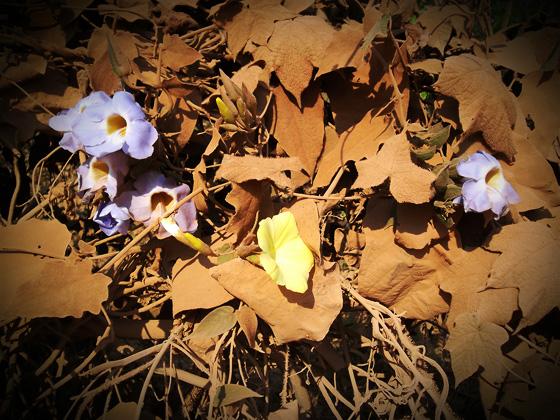 цветы в пыли в лаосе