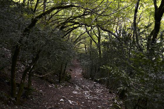 самшитовый лес у подножия моцаметы