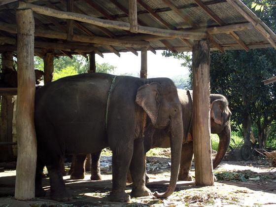 слоновник в Пае