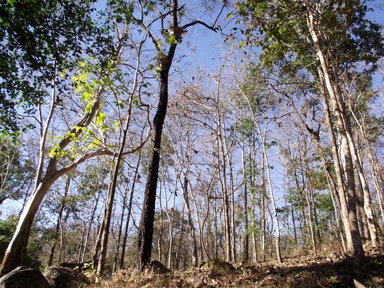 джунгли на севере Таиланда в январе