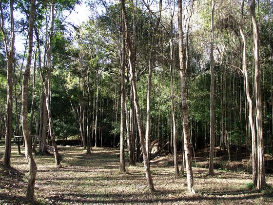 джунгли Шанского нагорья
