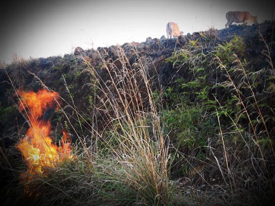 трава горит