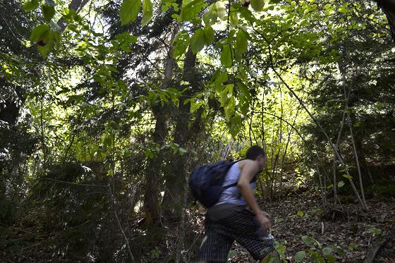 леса под монастырём сафара