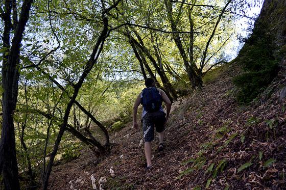 через горные леса к сафаре