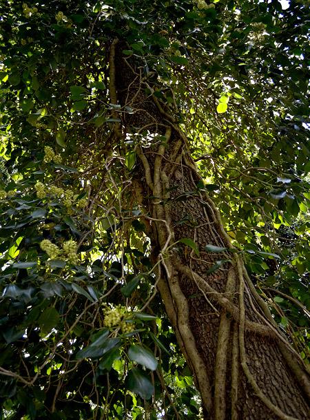 растительность сатаплия