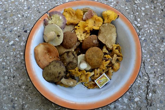 грибы в грузии