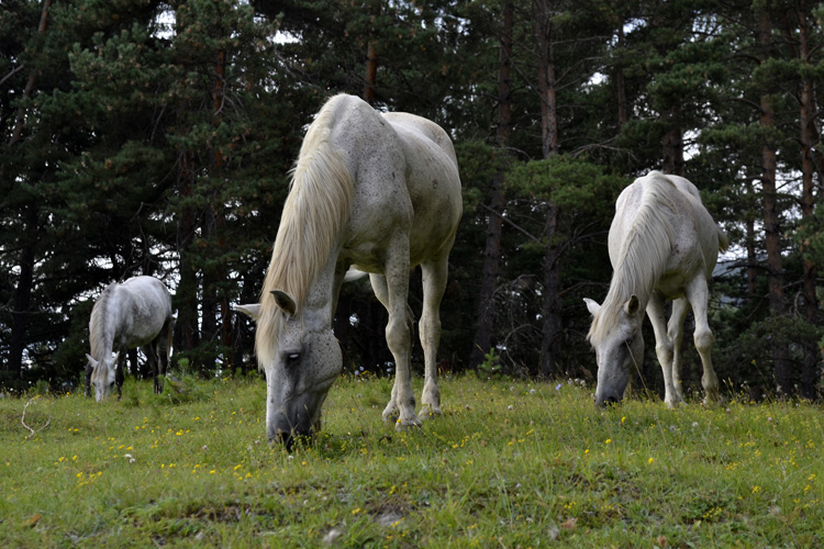 лошади в тушети