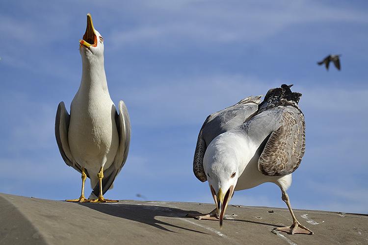 чайки в стамбуле