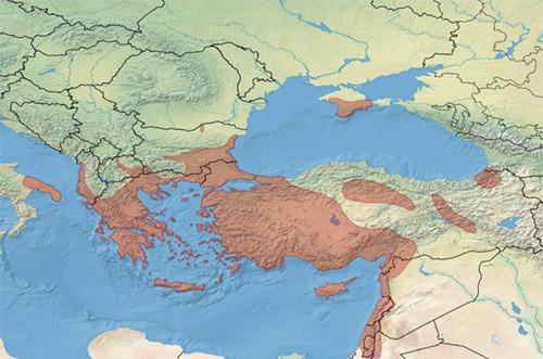 ареал обитания геккона средиземноморского