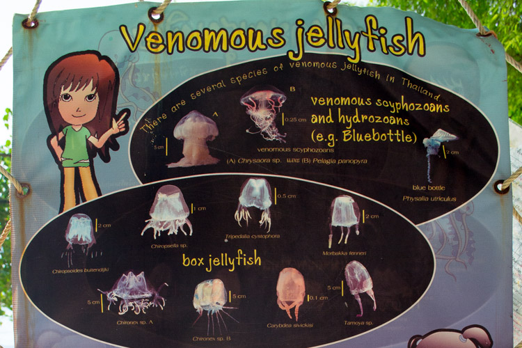 ядовитые медузы Краби