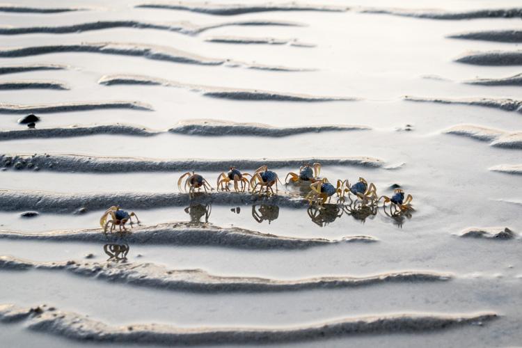 Крабы, Андаманское море, провинция Краби