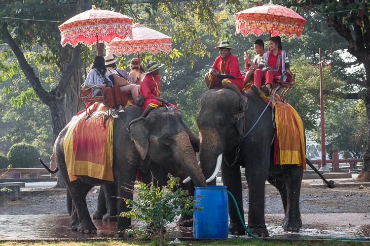 слоны, аюттайя